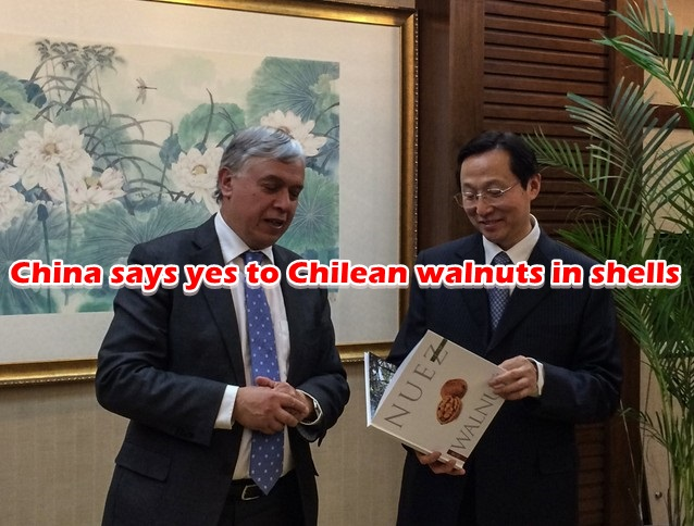 China says yes to Chilean walnuts in shells