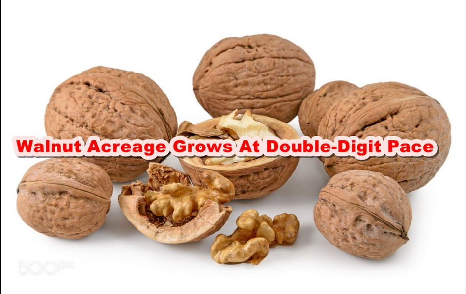 Walnut Acreage Grows At Double-Digit Pace
