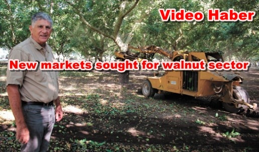 New markets sought for walnut sector
