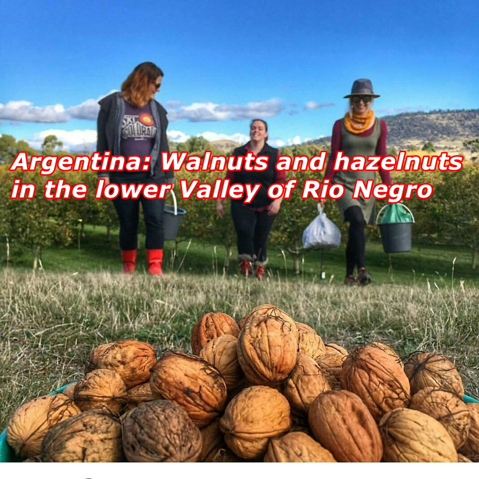Argentina: Walnuts and hazelnuts in the lower Valley of Rio Negro