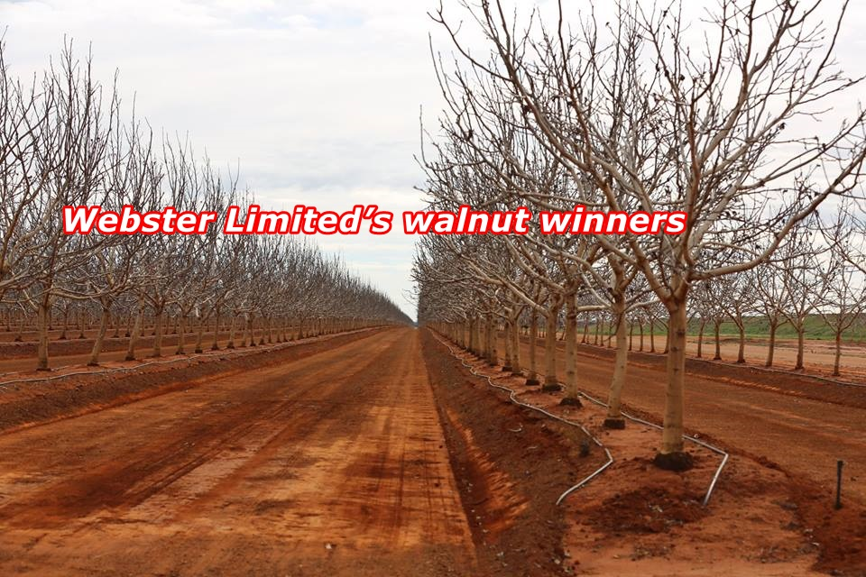 Webster Limited's walnut winners