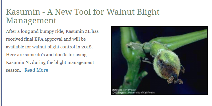 Kasumin – A New Tool for Walnut Blight Management
