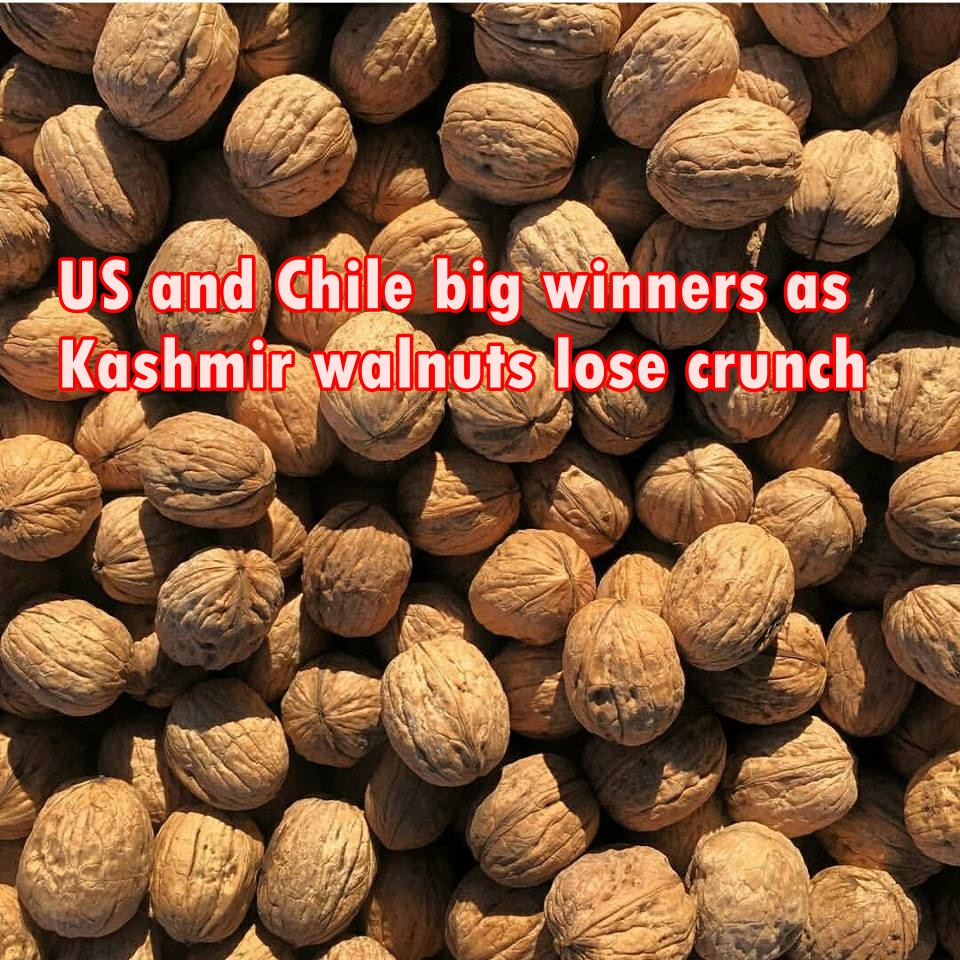 US and Chile big winners as Kashmir walnuts lose crunch